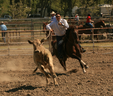 A demonstration of cattle roping during Colusa Western Days, an annual event reflecting the community's farming and ranching roots