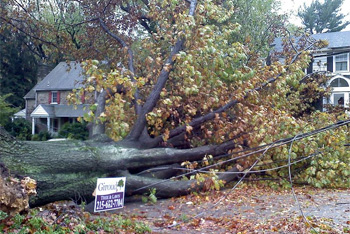 Damage from Hurricane Sandy in Wyncote, Cheltenham Township, Pennsylvania, USA (wikipedia)