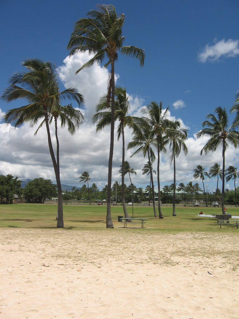 Palm trees along Ewa Beach